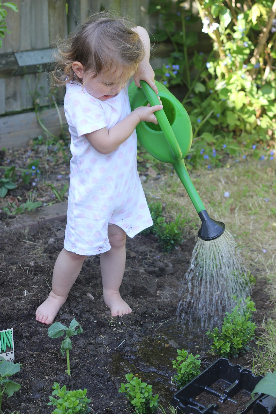 Making an organic vegetable garden with children the for Watering vegetable garden