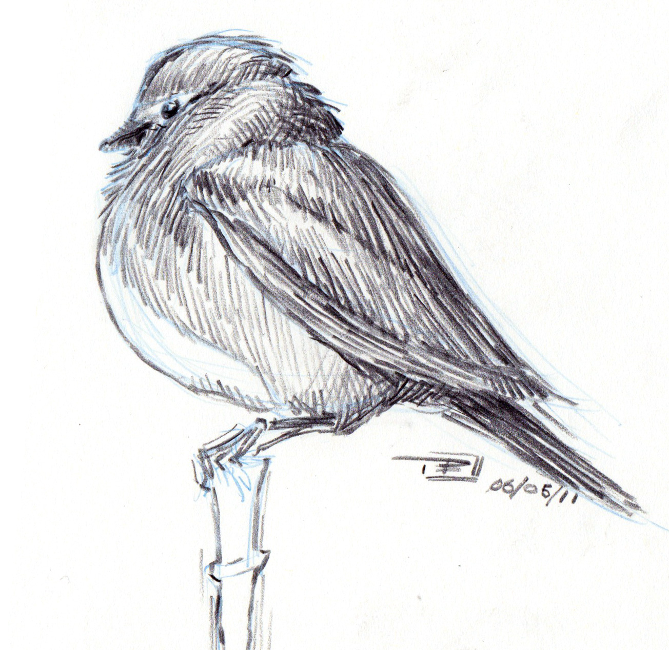 Niklas K Andersen Bird Sketches