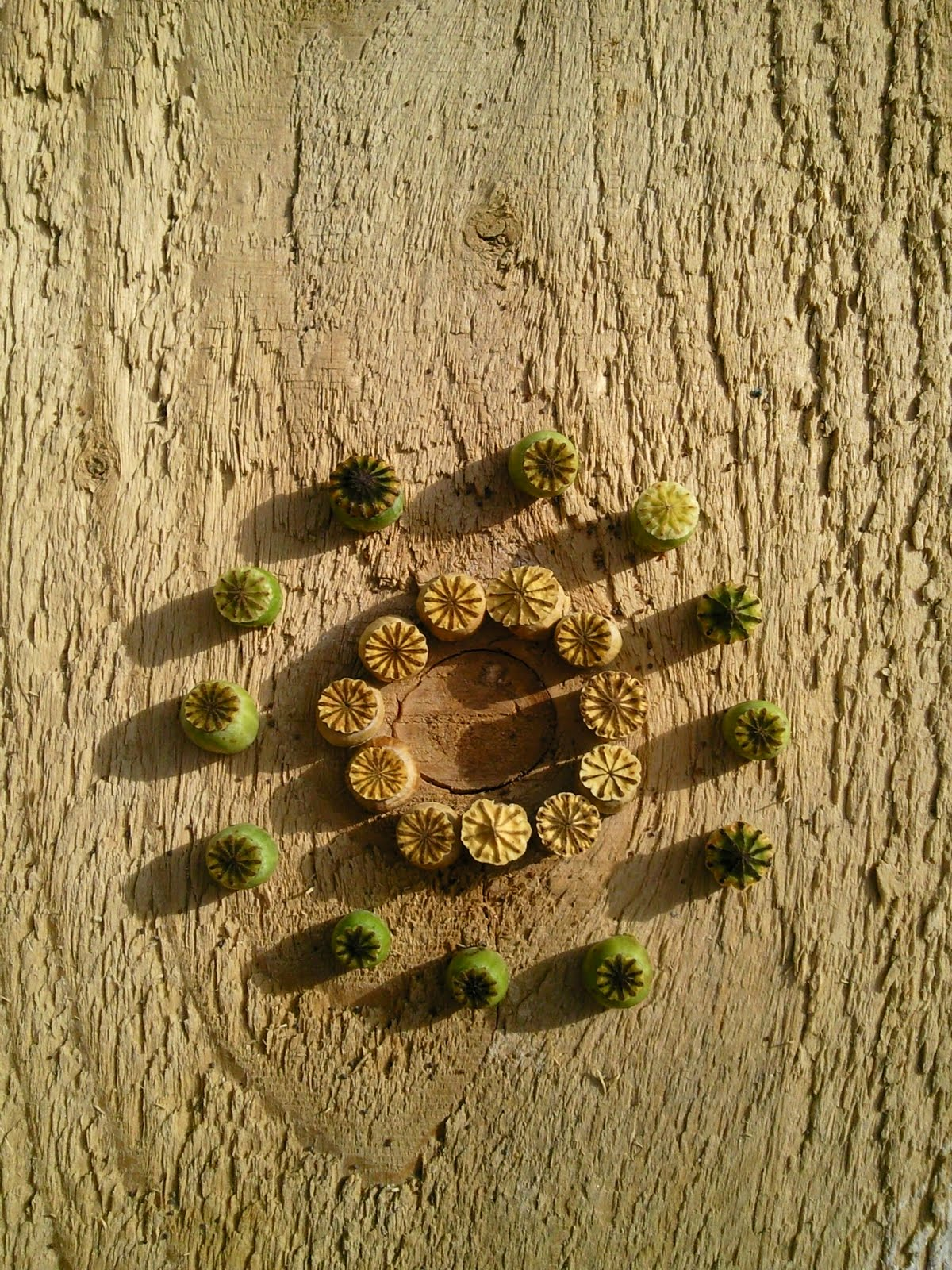 Nature et cr ation mini land art au petit jardin for Art jardin creation