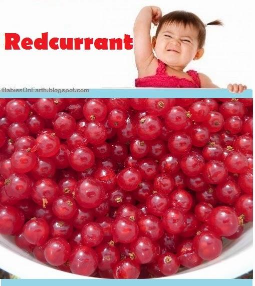 Baby Redcurrant