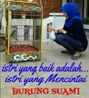 Istri Yang Baik Mencintai Burung Suami