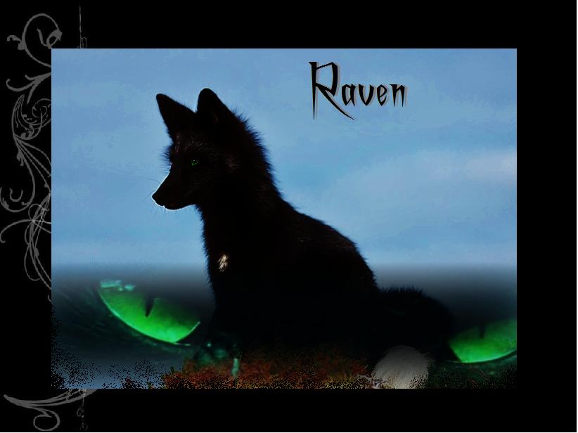 black wolf green eyes - photo #24