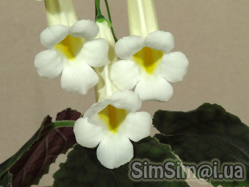 "Smithiantha ""Florida Sunspot"""