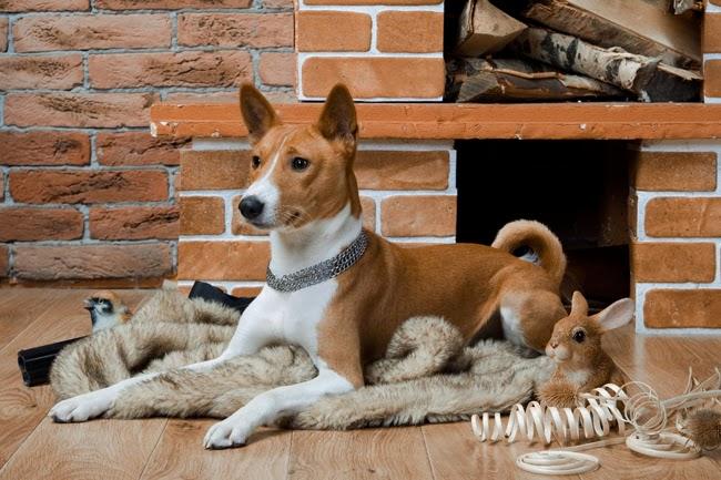 Likwidowanie niepożądanych zachowań u psa