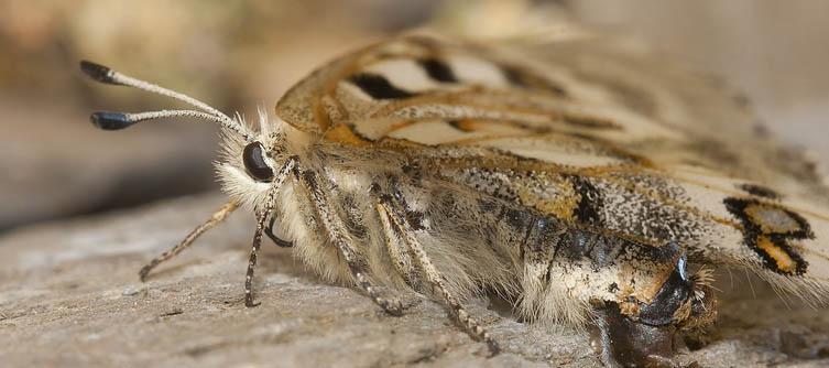 Boletín Sociedad Andaluza de Entomología Vol. 6