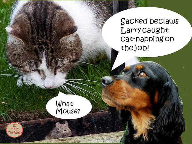 Larry The Dining Street Cat is sacked!
