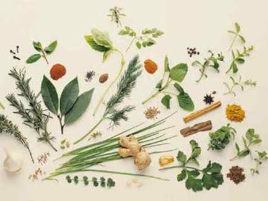 Ervas e Curas - O Glossário Herbal