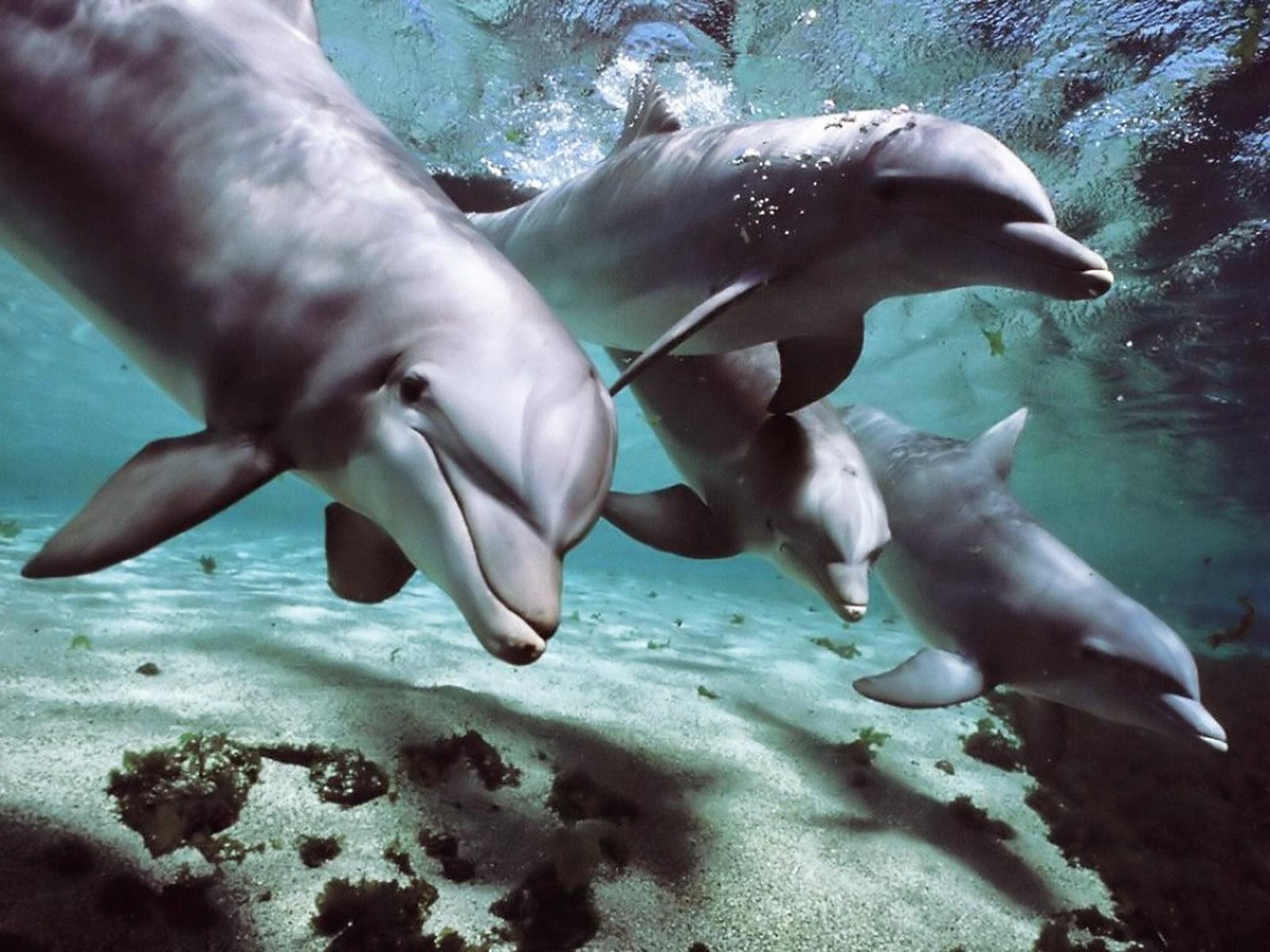"India Declares Dolphins ""Non-Human Persons"", Dolphin shows BANNED."