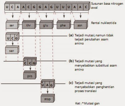 Penggantian basa pada rantai nukleotida. (a) Mutasi gen yang tidak menyebabkan perubahan asam amino, (b) terjadi perubahan asam amino, dan (c) menyebabkan penghentian proses translasi.