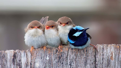 a-cute-lovely-birds-images