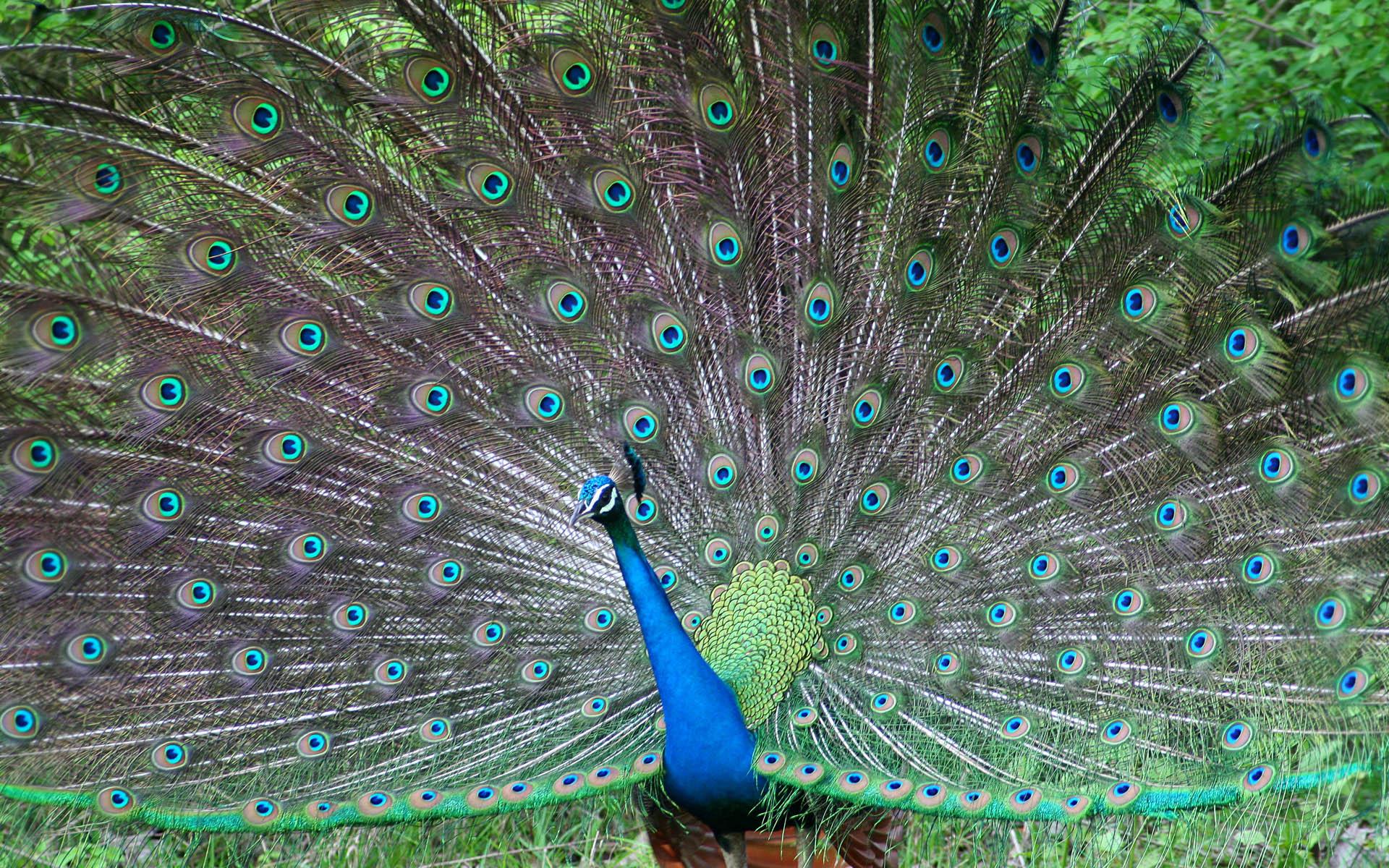 http://2.bp.blogspot.com/--FMdeQHwmQU/TsfHRu0P_MI/AAAAAAAAZ08/UuSYtvcgfus/d/windows+8+wallpapers+-+birds+1920x1200+%252821%2529.jpg