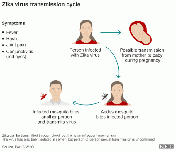 Cara Penyebaran Virus Zika