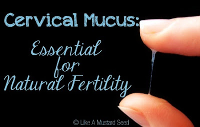 Cervical mucus after ovulation on clomid