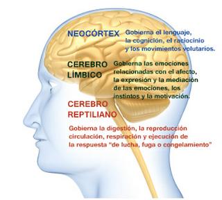 Tronco encefalico y sus partes y funciones