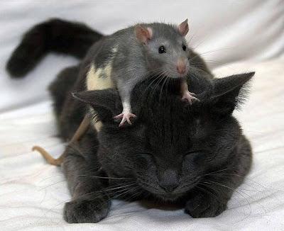 kucing sekarang tidak suka tikus korupsi, lirik doel sumbang korupsi itu rock n roll