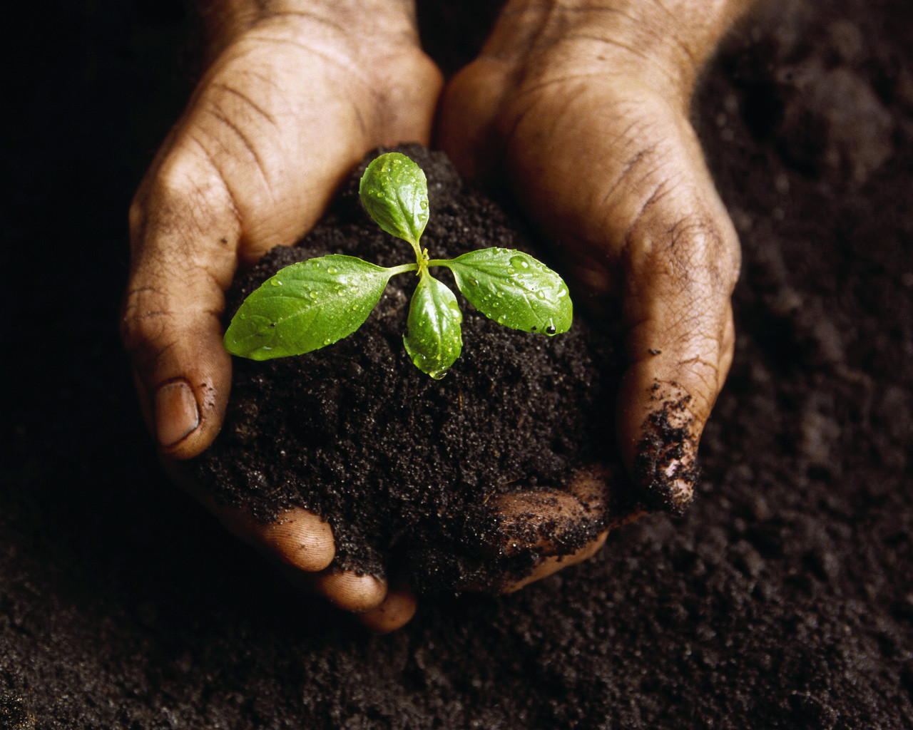 The earth organization namibia our endangered dirt for Soil 60 years