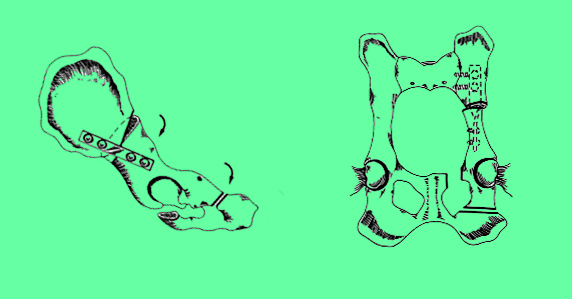 triple osteotomía cadera en perro
