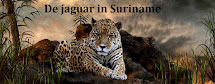 De jaguar - Panthera onca - in Suriname