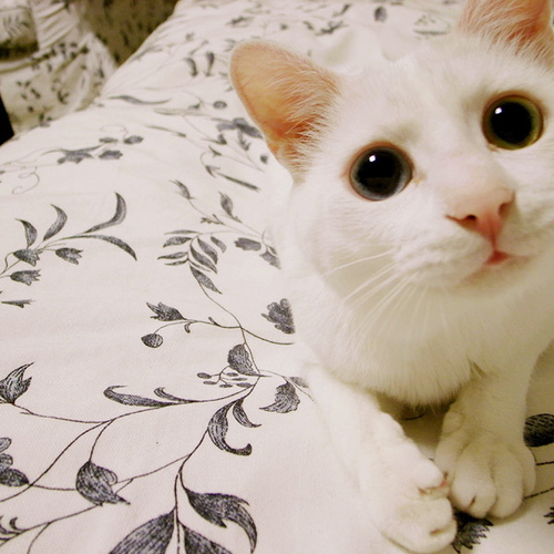 gambar kucing lucu dan menggemaskan