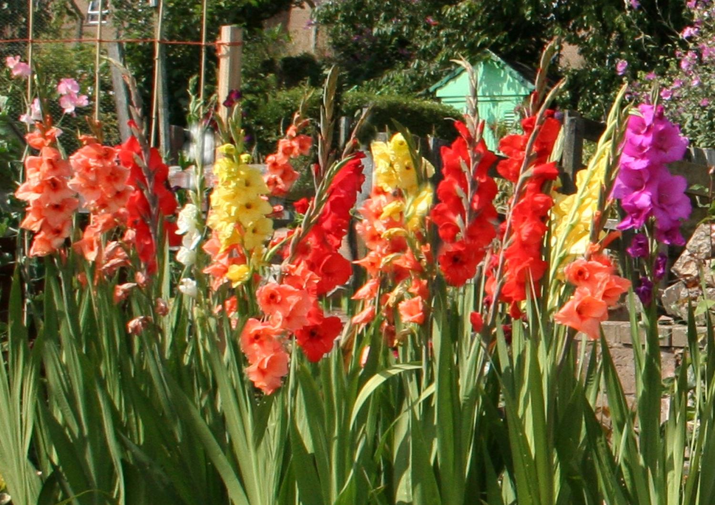 Scottish Artist and his Garden Cut Flowers