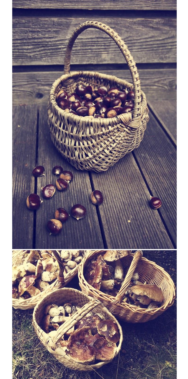 châtaignes et cèpes d'ardèche cueillette d'automne