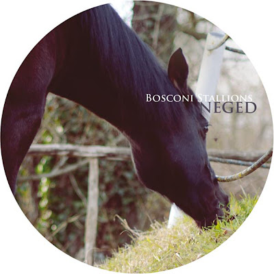 Discosafari - VARIOUS ARTISTS - Bosconi Stallions | Neged - Bosconi Records