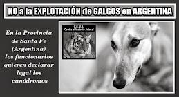 NO a la EXPLOTACIÓN de GALGOS