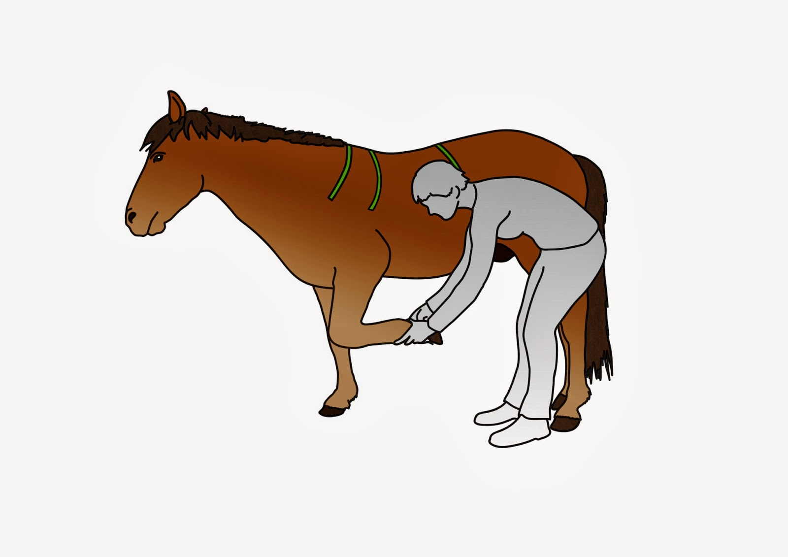 Schultermuskel-Probleme Pferd: Hilfen zur optimalen Sattelanpassung ...