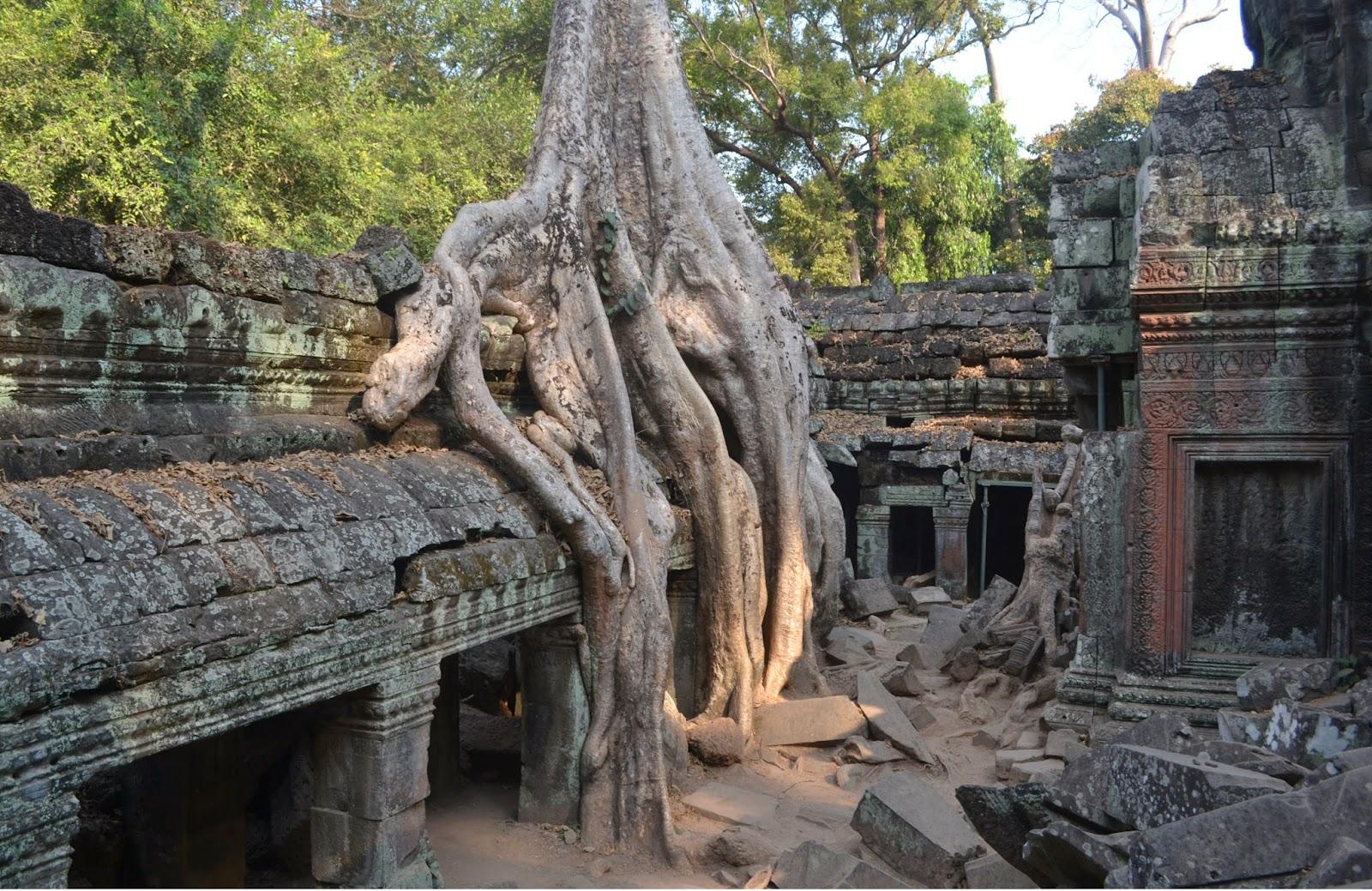 Ta prohm Temple Angkor Wat Siam Reap Cambodia