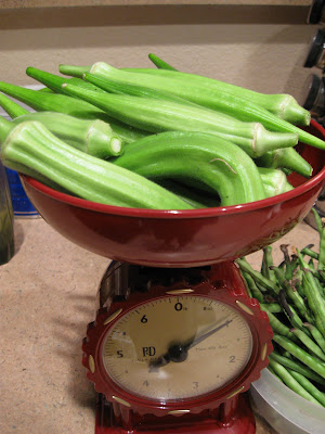 how to grow okra in melbourne