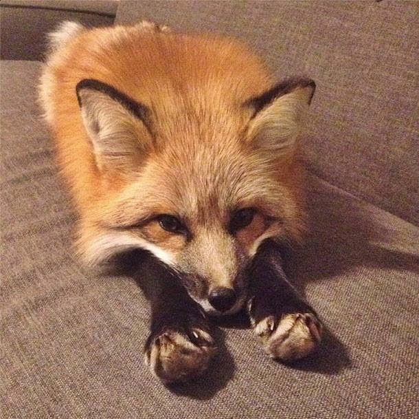 Funny animals of the week - 24 October 2014 (40 pics), funny animal, animal pictures