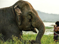Gadis Cilik Ini Taklukkan Gajah untuk Jadi Peliharannya