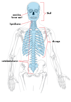 Px Axial Skeleton Diagram Svg on 4 Parts Of A Synovial Joint