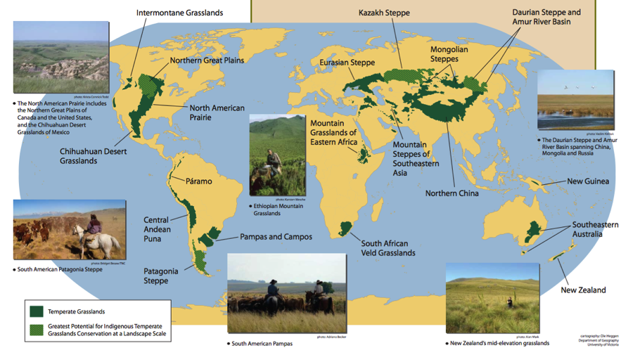Earth's Major Biomes   Lessons   Tes Teach