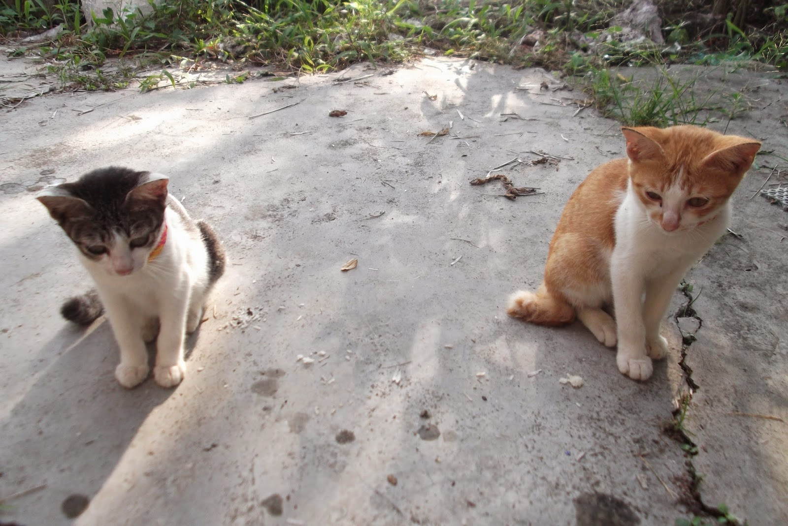dua ekor anak kucing yang comel