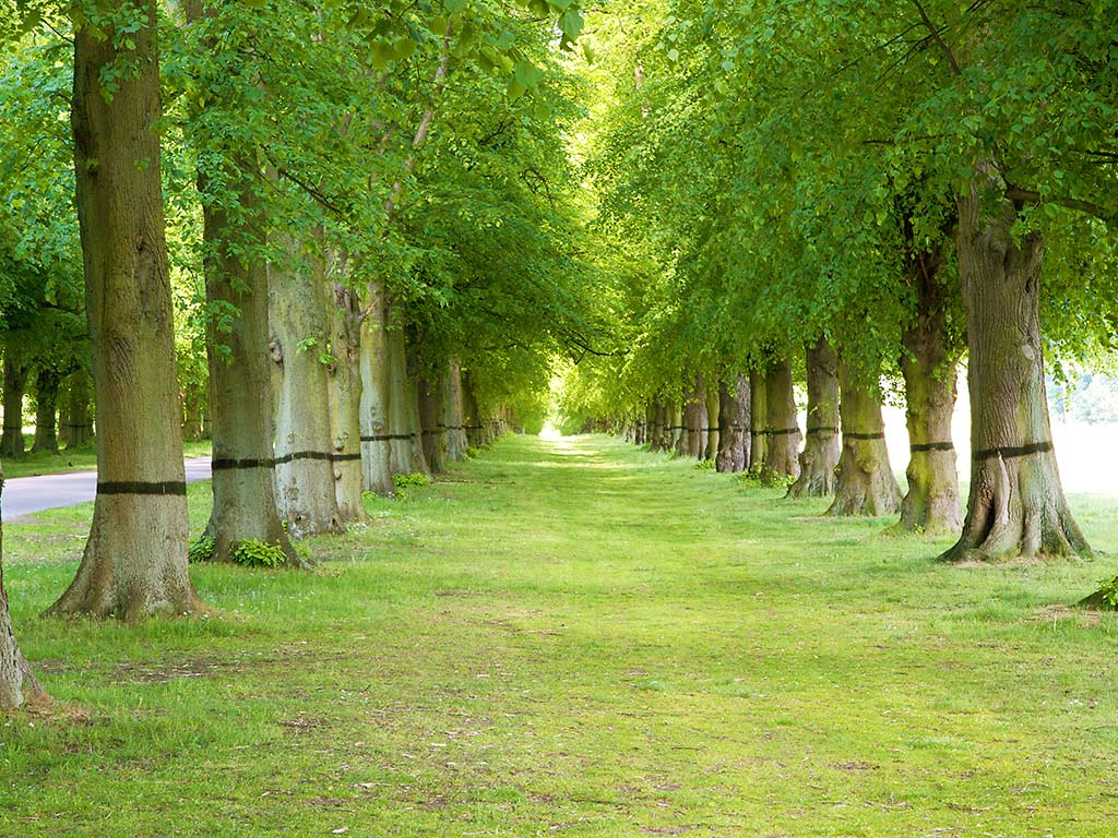 Free wallpaper green trees in garden wallpaper for Trees for back garden