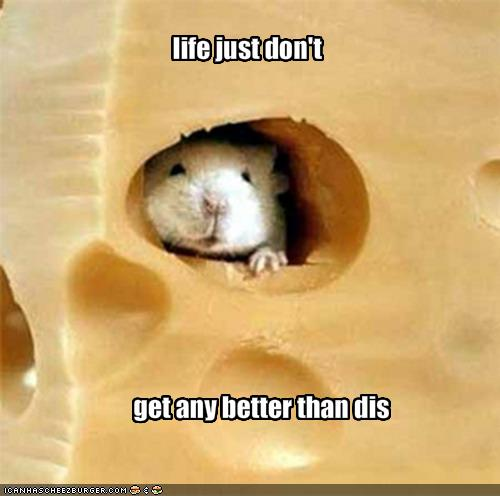 dreams - Page 8 Funny-pictures-mouse-in-cheese-says-that-life-does-not-get-better