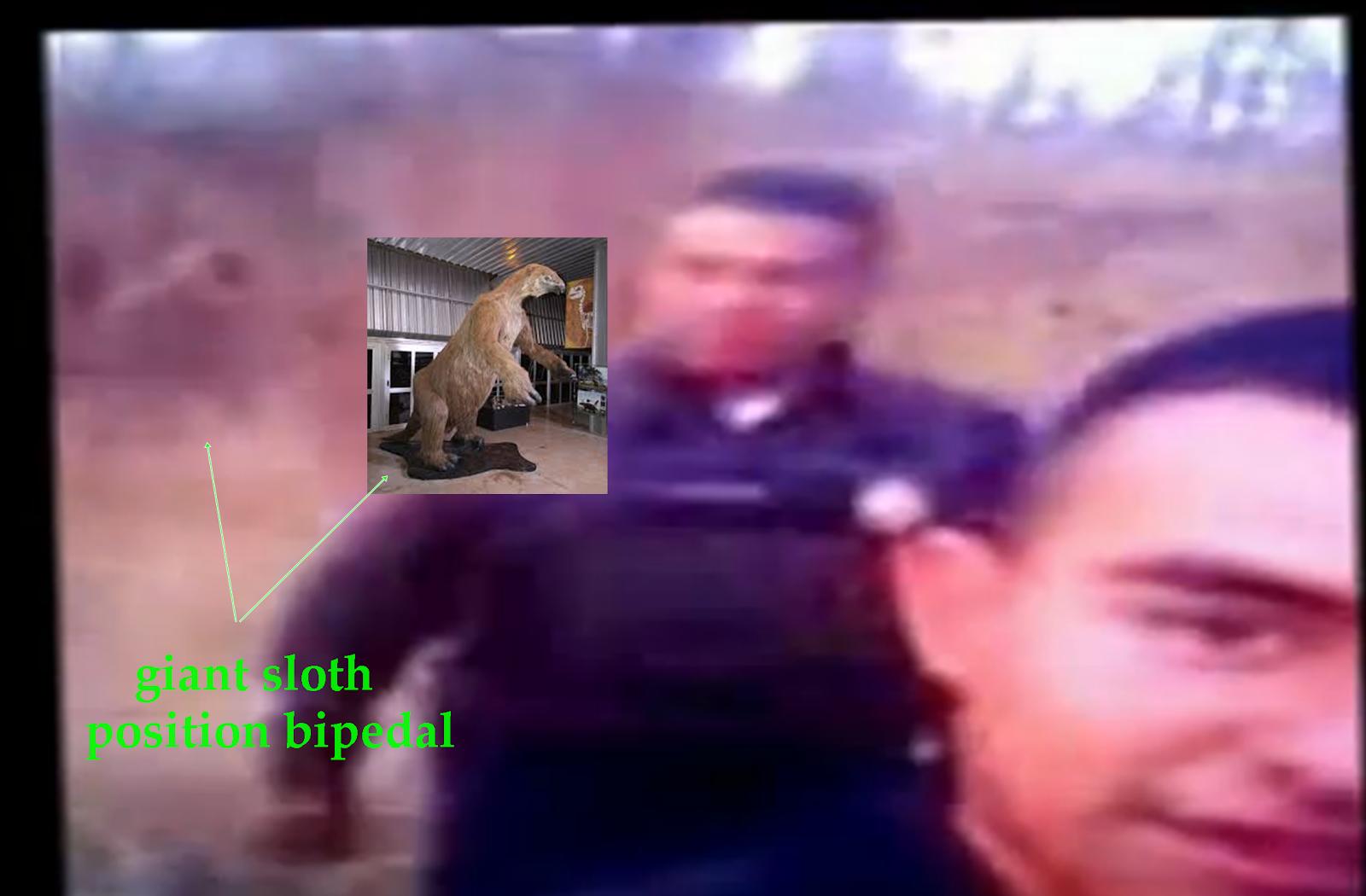 imagen de video mx