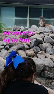aquarium owl