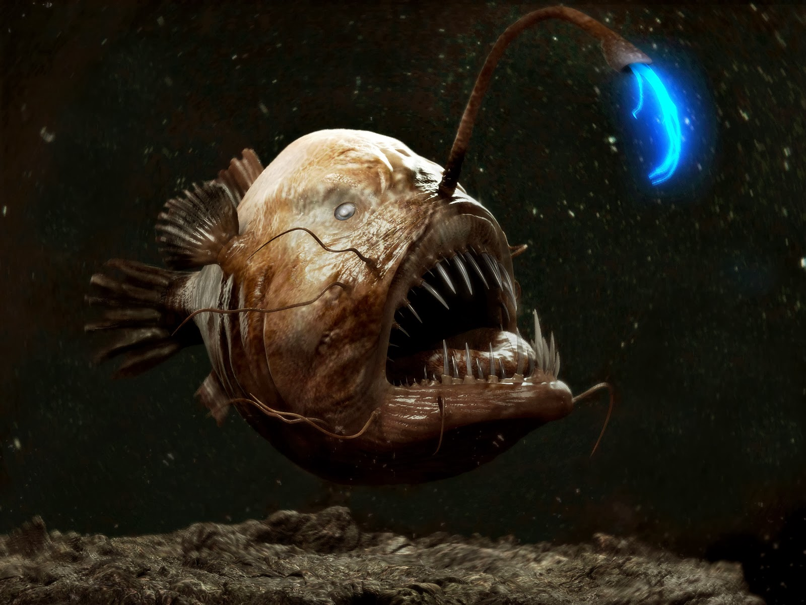 Angler fish finding nemo for What do angler fish eat