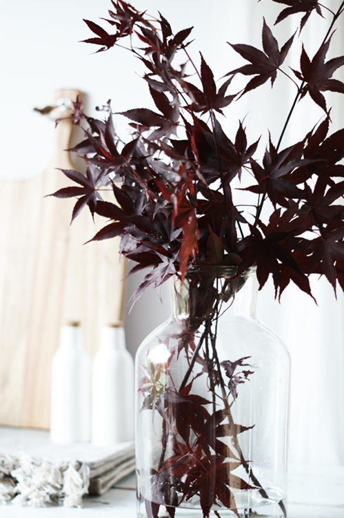 flowers japanischer ahorn hinter und im glas. Black Bedroom Furniture Sets. Home Design Ideas