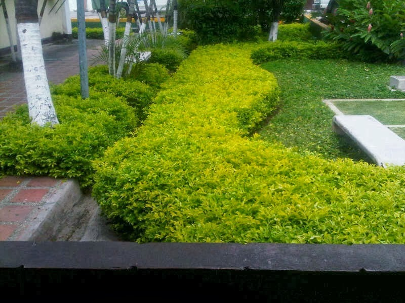 for Paisajismos en jardines