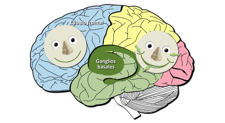 Sonrisas genuinas y fingidas en el cerebro
