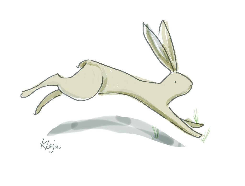 Running Rabbit Drawing Run Rabbit Run