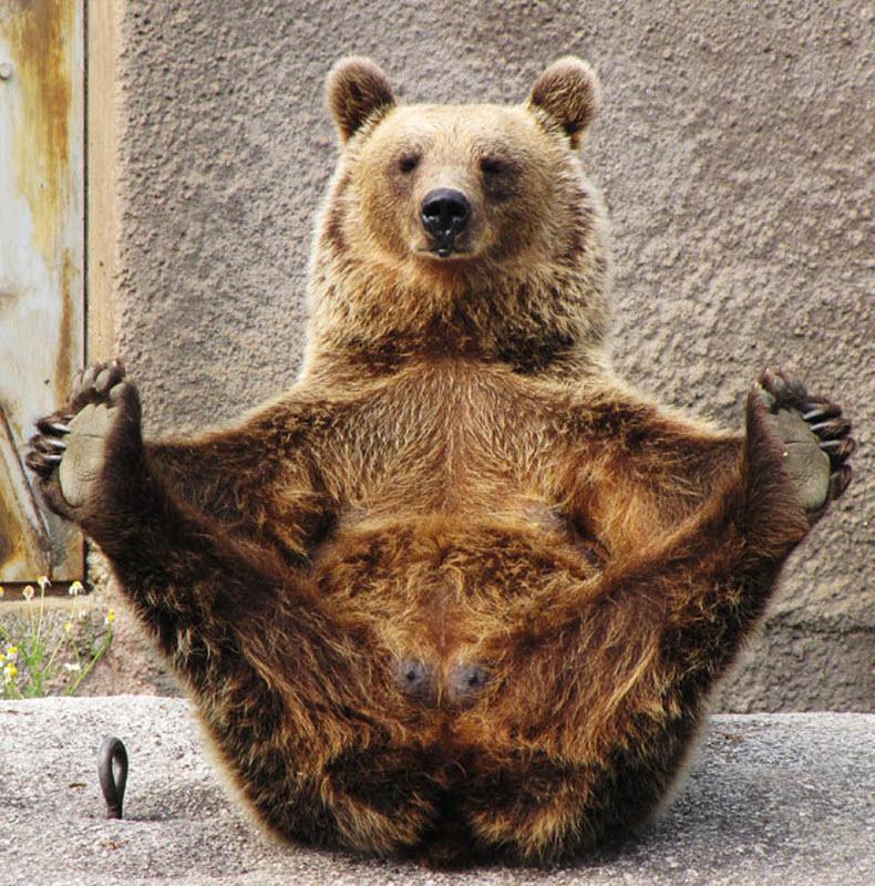 yogi-bear-02.jpg
