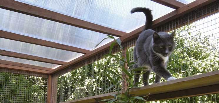 Kandang luar untuk kucing