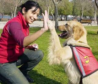 Primeras Etapas Adiestramiento de perros