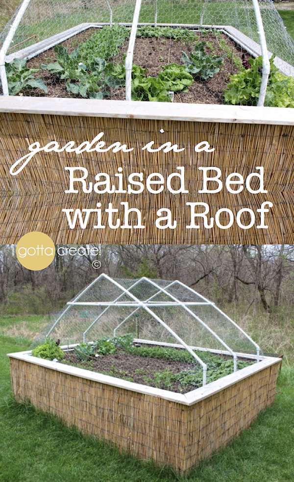 I Gotta Create Raised Garden Bed with a Roof