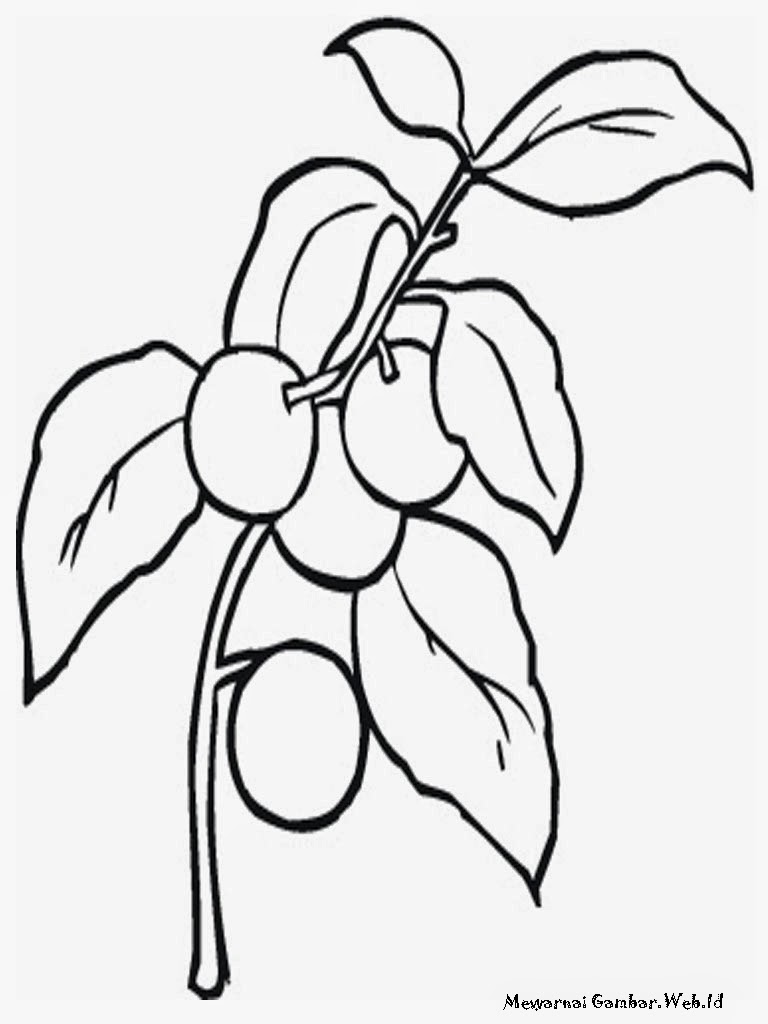 Realistic Cherry Tree Coloring Pages