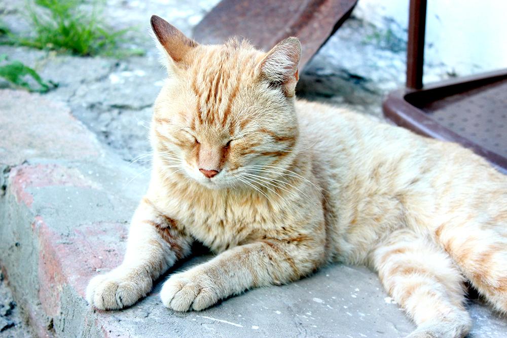 красивое фото, кот